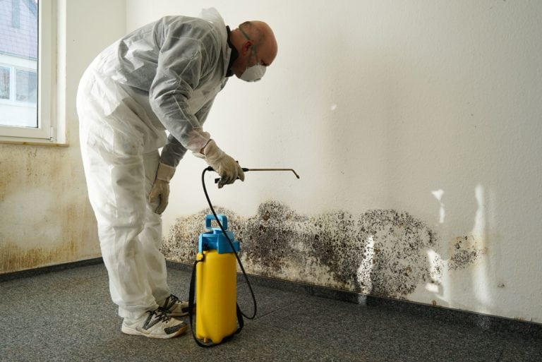 Image result for mold inspection services